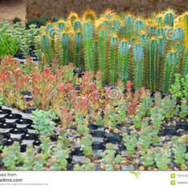 Succulant Nursery and Landscaping